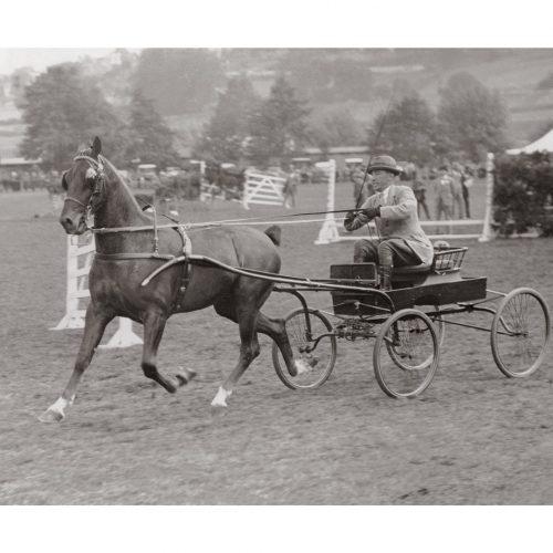 Photo d'époque Equitation n°09 - photographe Victor Forbin