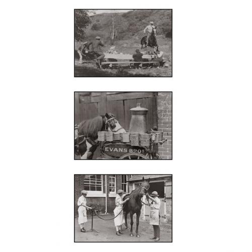 Photo d'époque équitation n°30 - triptyque - Victor Forbin