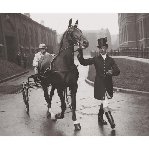 Photo d'époqe Equitation n°35 - cheval - belle époque