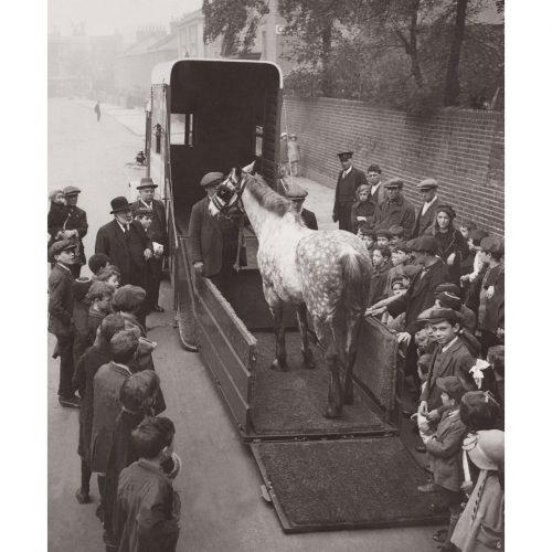 Photo d'époque Equitation n°36 - nouvelle ambulance équine - photographe Victor Forbin