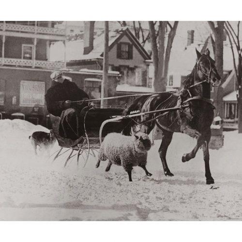 Photo d'époque Equitation n°45 - amitié mouton et cheval - Whitefield, Etats-Unis