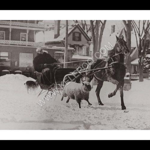 Photo d'époqe Equitation n°45 - amitié mouton et cheval - Whitefield, Etats-Unis