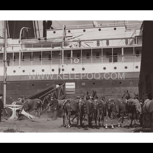 Photo d'époque Equitation n°37 - chevaux de polo anglais