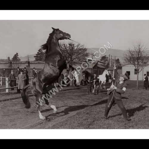 Photo d'époqe Equitation n°38 - étalon - photographe Victor Forbin
