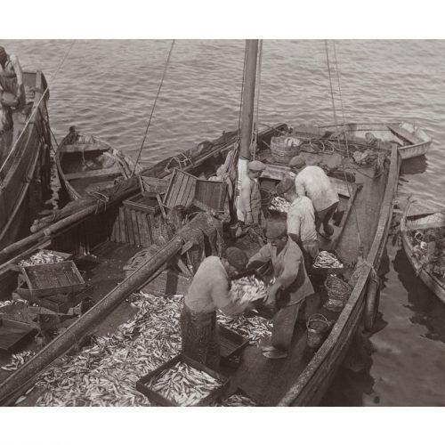 Photo d'époque Pêche n°77 - Arrivée des sardiniers - Quiberon