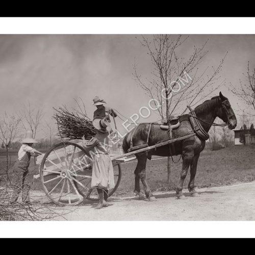Photo d'époque campagne n°17 - ramassage du bois en charrette à cheval - Photographe Victor Forbin