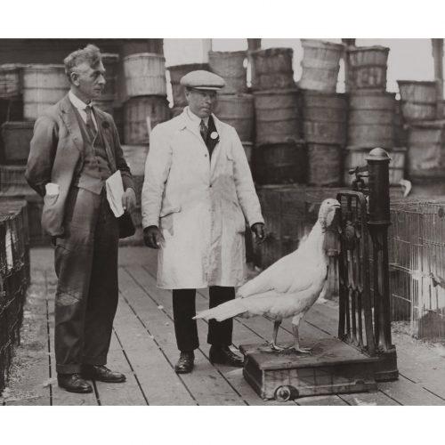 Photo d'époque métiers n°30 - Crystal Palace Poultry Show - Londres