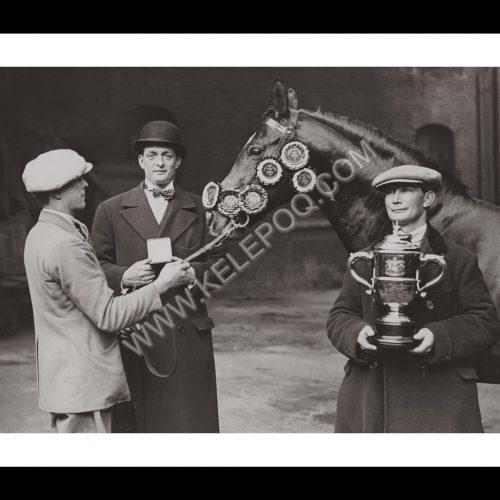 Photo d'époqe Equitation n°51 - remise des prix - étalon
