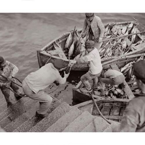Photo d'époque Pêche n°79 - débarquement du thon