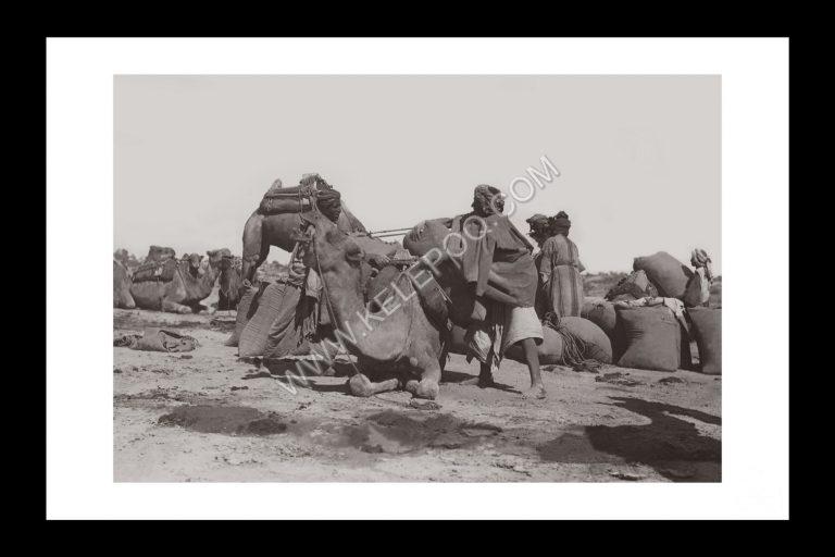 Photo d'époque invitation au voyage n°07 - chameaux