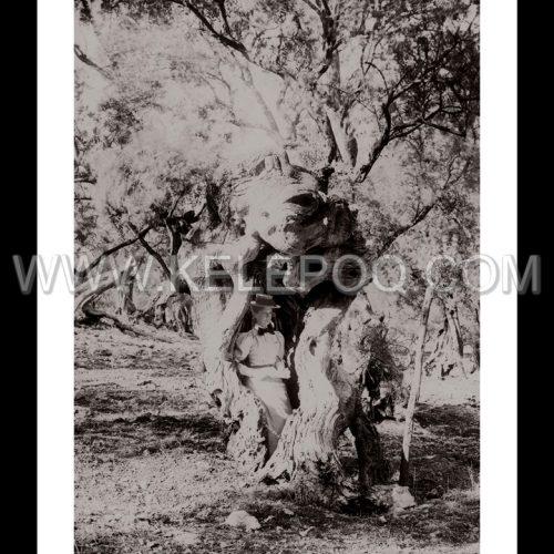 Photo d'époque Campagne n°22 - cache-cache dans le tronc d'un chêne
