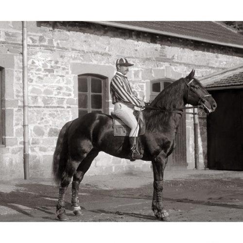 Photo d'époque Equitation n°57 - Marabout Trotteur alezan né en 1890