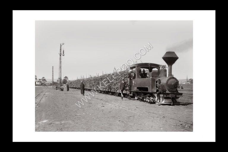 Photo Locomotive n°17 - Transport de la canne à sucre en Haute Egypte