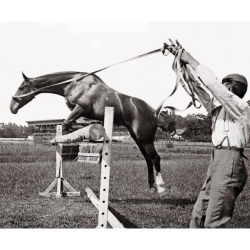 Photo d'époque Equitation n°67 - entraînement au saut d'obstacle