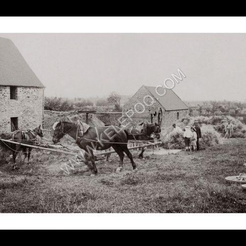 Photo d'époque Campagne n°30 - Batteuse mécanique à la ferme