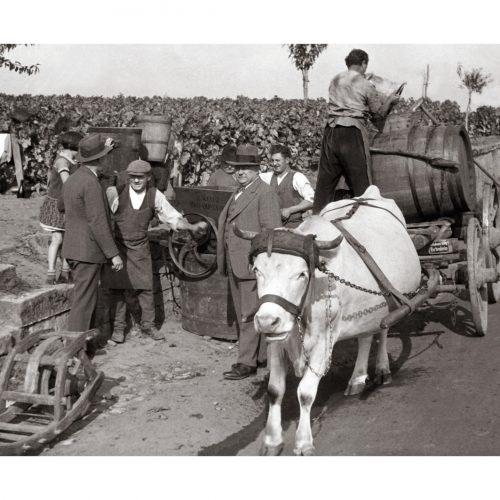 Photo d'époque Métiers n°51 - Vignerons